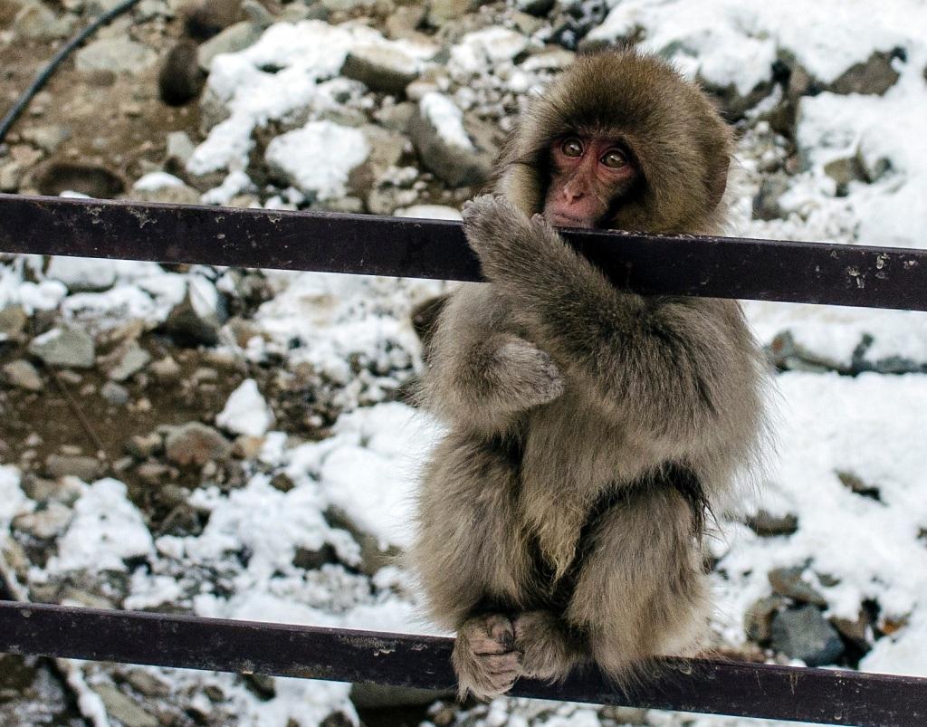 Fence monkey