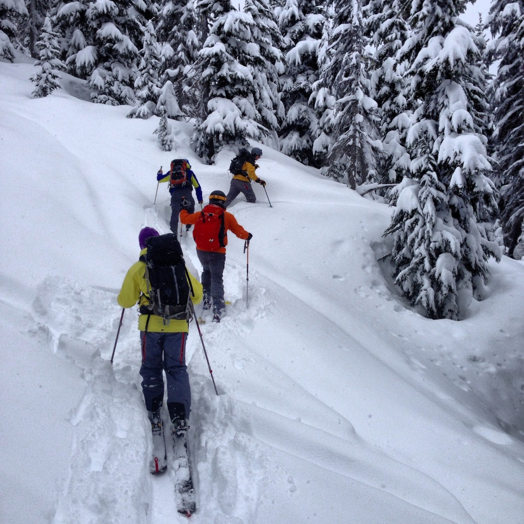 Skinning up through the trees near disease ridge